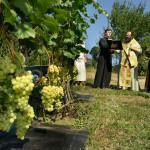 Наместник Киево-Печерской Лавры освятил монастырский виноградник
